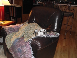 Charlie is wrapped up and sleeping